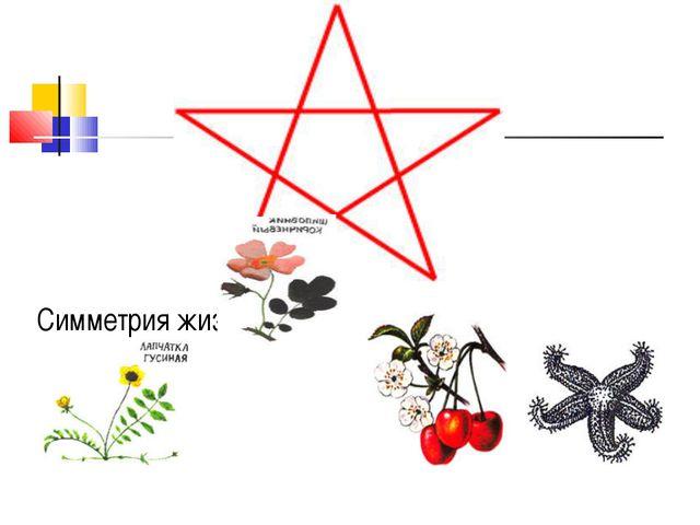 Симметрия жизни