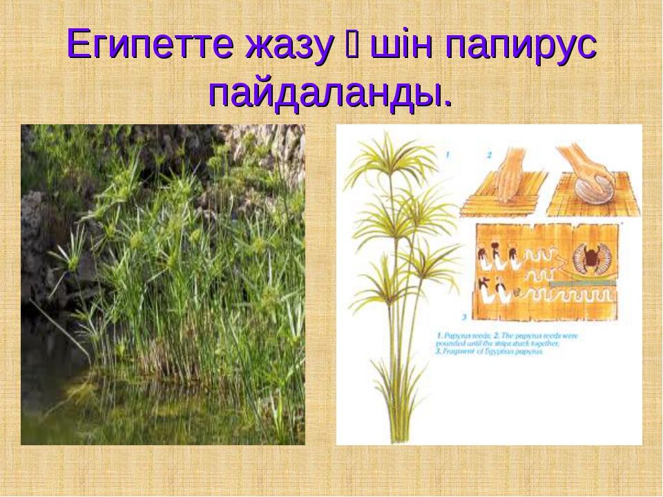 Египетте жазу үшін папирус пайдаланды.