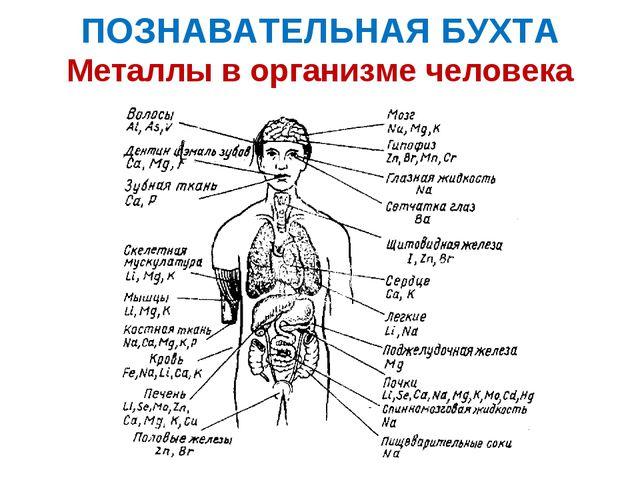 ПОЗНАВАТЕЛЬНАЯ БУХТА Металлы в организме человека