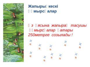 Жапырықкескі құмырсқалар Өз ұясына жапырақ тасушы құмырсқалар қатары 250метрг