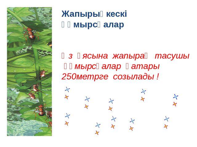Жапырықкескі құмырсқалар Өз ұясына жапырақ тасушы құмырсқалар қатары 250метрг...