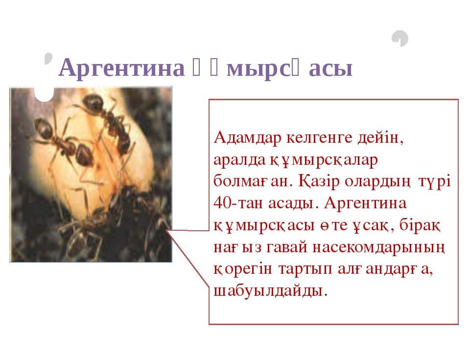 Адамдар келгенге дейін, аралда құмырсқалар болмаған. Қазір олардың түрі 40-та...