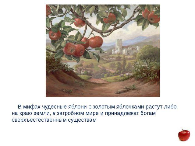 В мифах чудесные яблони с золотым яблочками растут либо на краю земли, в заг...