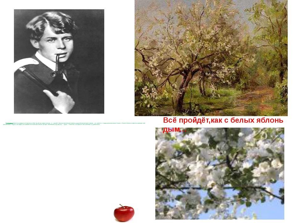 У С. Есенина яблоня ассоциируется с радостью («Все мы яблоко радости носим.....