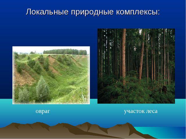 Локальные природные комплексы: овраг участок леса
