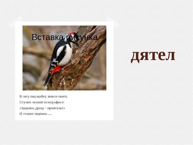 дятел В лесу под щебет, звон и свист, Стучит лесной телеграфист: «Здорово, др...