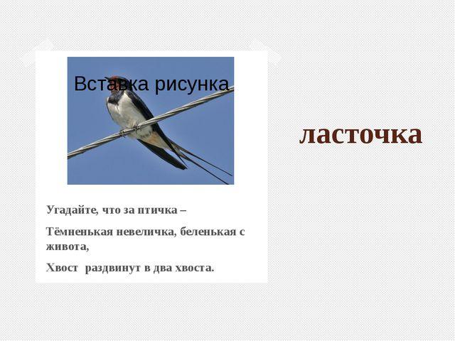 ласточка Угадайте, что за птичка – Тёмненькая невеличка, беленькая с живота,...