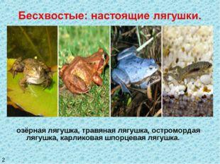 озёрная лягушка, травяная лягушка, остромордая лягушка, карликовая шпорцевая