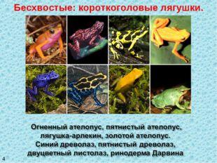 Бесхвостые: короткоголовые лягушки. 4