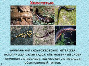 аллеганский скрытожаберник, китайская исполинская саламандра, обыкновенный си