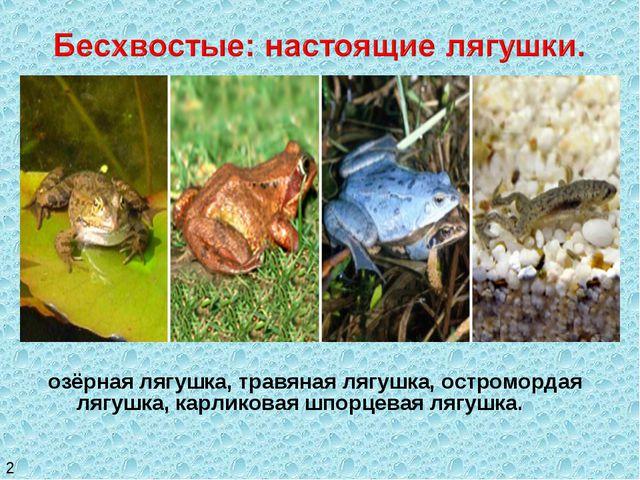 озёрная лягушка, травяная лягушка, остромордая лягушка, карликовая шпорцевая...