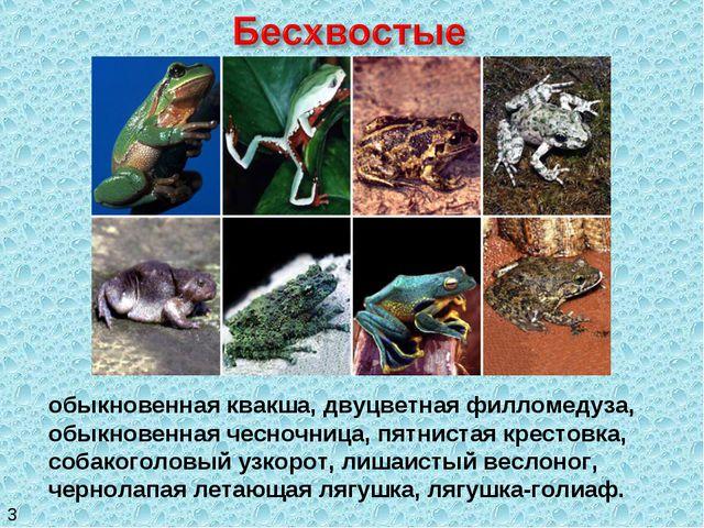 обыкновенная квакша, двуцветная филломедуза, обыкновенная чесночница, пятнист...