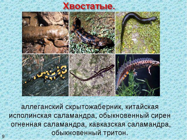 аллеганский скрытожаберник, китайская исполинская саламандра, обыкновенный си...