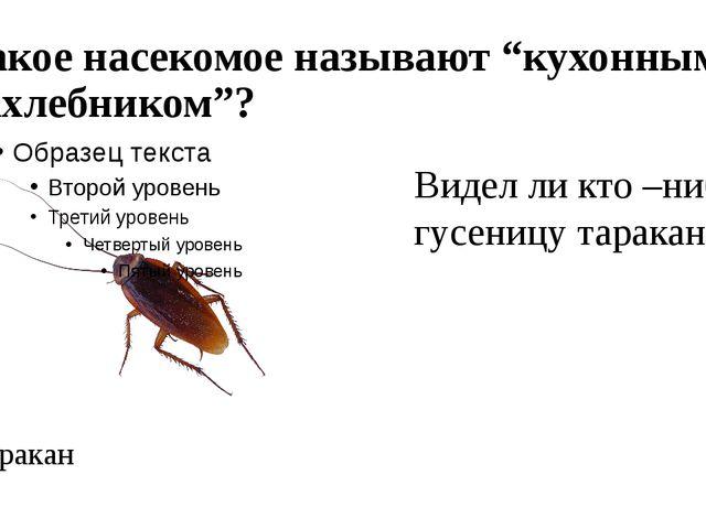 """Какое насекомое называют """"кухонным нахлебником""""? Таракан Видел ли кто –нибуд..."""