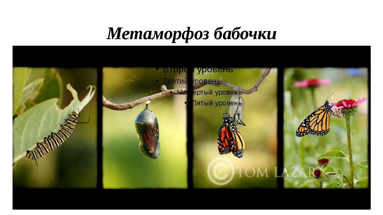 Метомарфоза
