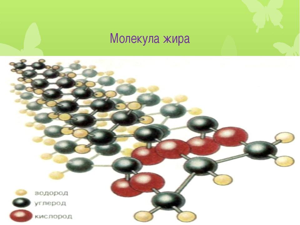 Молекула жира