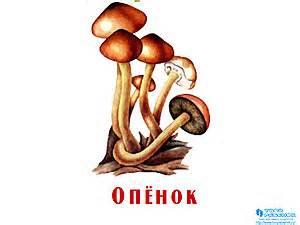 C:\Users\Администратор\Desktop\griby-prezentatsiya-dlya-detey-22-small.jpg