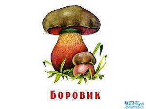 C:\Users\Администратор\Desktop\griby-prezentatsiya-dlya-detey-18-small.jpg