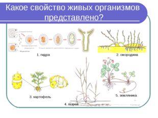 Какое свойство живых организмов представлено? 1. гидра 2. смородина 3. картоф