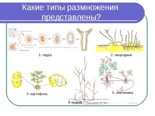 Какие типы размножения представлены? 1. гидра 2. смородина 3. картофель 4. пы
