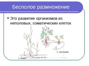 Бесполое размножение Это развитие организмов из неполовых, соматических клето