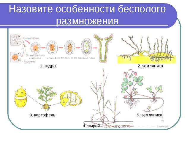 Назовите особенности бесполого размножения 1. гидра 2. земляника 3. картофель...