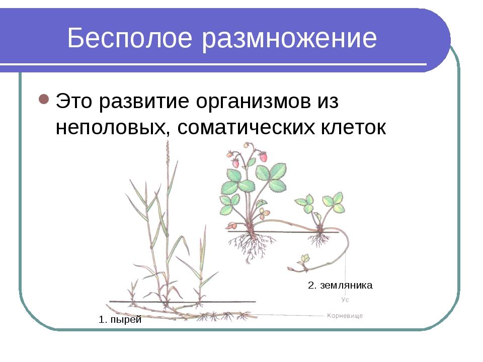 Бесполое размножение Это развитие организмов из неполовых, соматических клето...