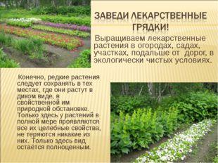 Выращиваем лекарственные растения в огородах, садах, участках, подальше от д