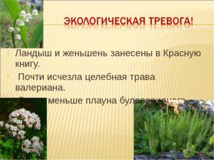 Ландыш и женьшень занесены в Красную книгу. Почти исчезла целебная трава вале
