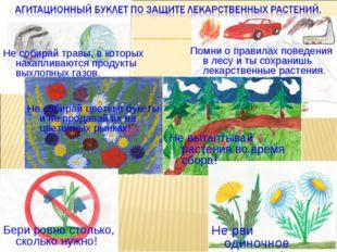 Не вытаптывай растения во время сбора! Не рви одиночное растение! Не собирай