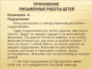 Казанцева А. Подорожник Хочу рассказать о лекарственном растении – подорож