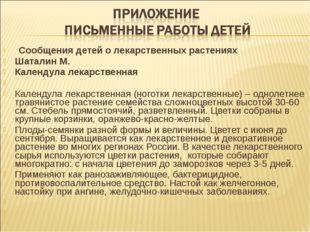 Сообщения детей о лекарственных растениях Шаталин М. Календула лекарствен
