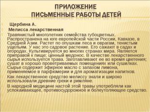 Щербина А. Мелисса лекарственная Травянистый многолетник семейства губоцв