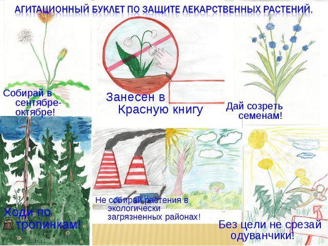 Ходи по тропинкам! Без цели не срезай одуванчики! Не собирай растения в эколо...