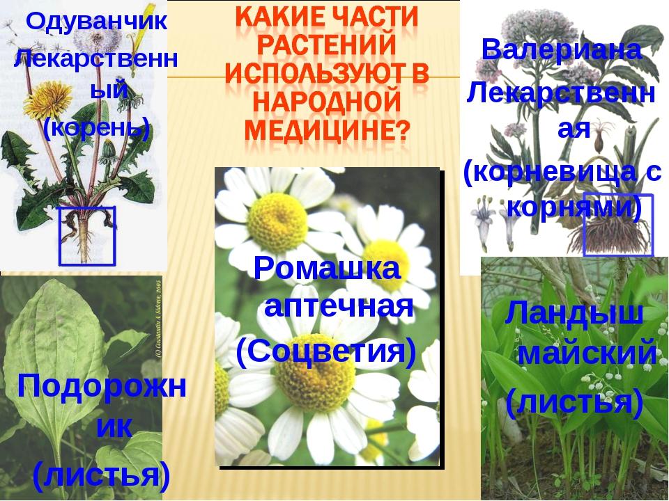 Ромашка аптечная (Соцветия) Валериана Лекарственная (корневища с корнями) Оду...