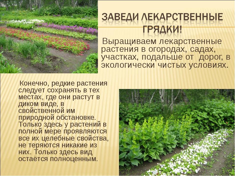 Выращиваем лекарственные растения в огородах, садах, участках, подальше от д...