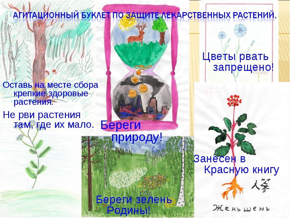 Занесен в Красную книгу Не рви растения там, где их мало. Цветы рвать запреще...