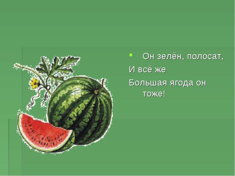 Он зелён, полосат, И всё же Большая ягода он тоже!