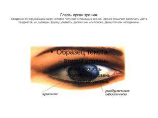 Глаза- орган зрения. Сведения об окружающем мире человек получает с помощью з