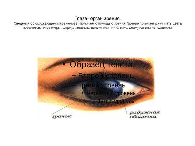 Глаза- орган зрения. Сведения об окружающем мире человек получает с помощью з...
