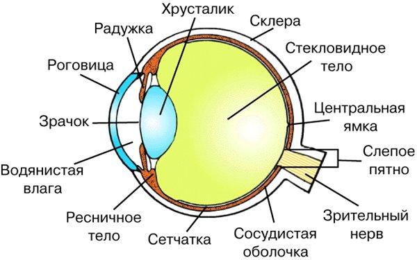 http://i046.radikal.ru/0801/93/f824880c1493.jpg