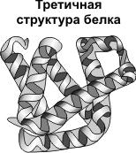третичная структура белка