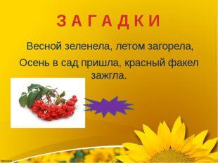 Весной зеленела, летом загорела, Осень в сад пришла, красный факел зажгла. Р