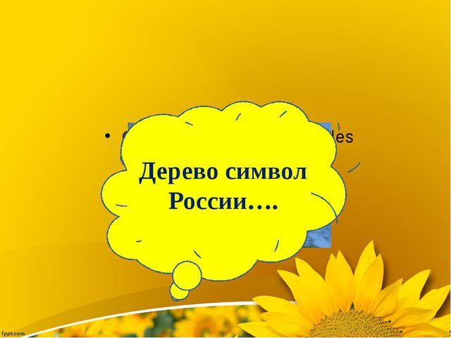Дерево символ России….