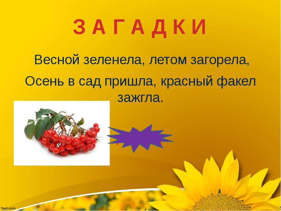 Весной зеленела, летом загорела, Осень в сад пришла, красный факел зажгла. Р...