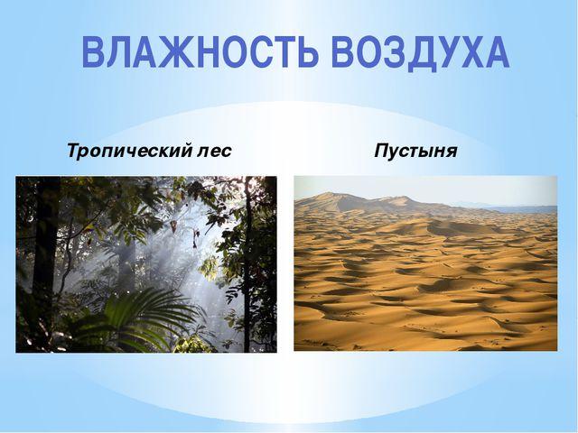 ВЛАЖНОСТЬ ВОЗДУХА Тропический лес Пустыня