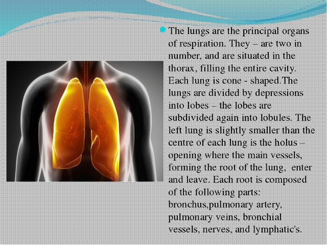 The lungs are the principal organs of respiration. They – are two in number,...