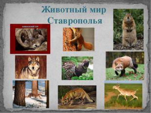 Животный мир Ставрополья