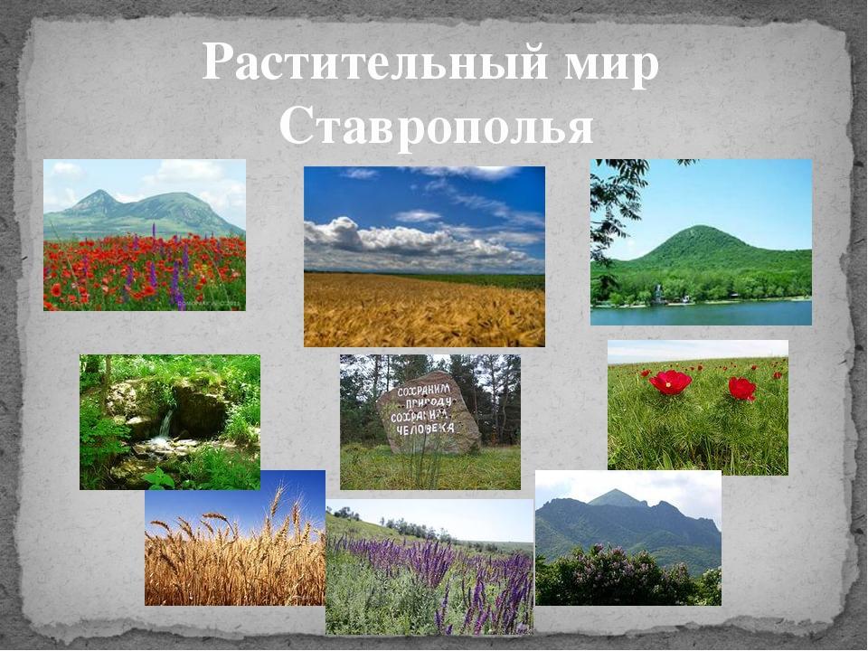 Растительный мир Ставрополья