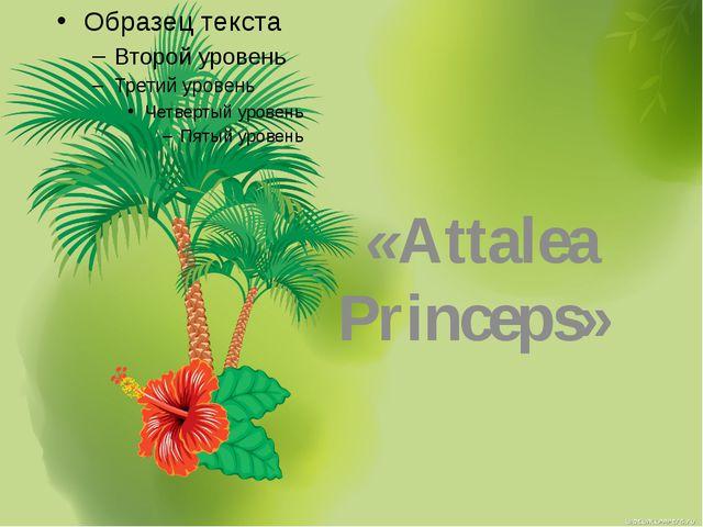 «Attalea Princeps»